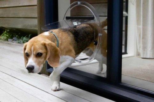 Elite Glass - Pet Doors - Sunshine Coast